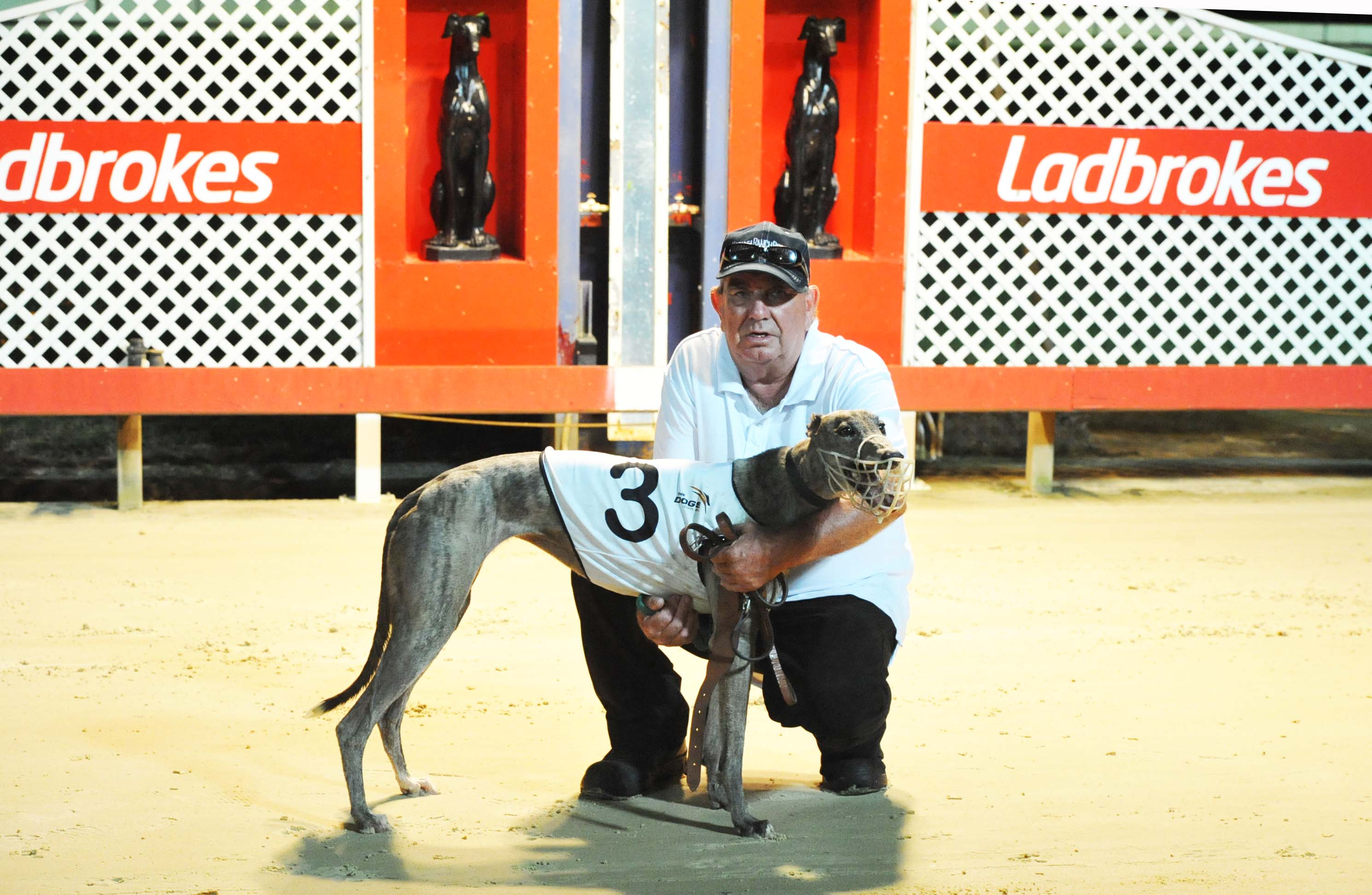 Facts About Greyhound Dogs