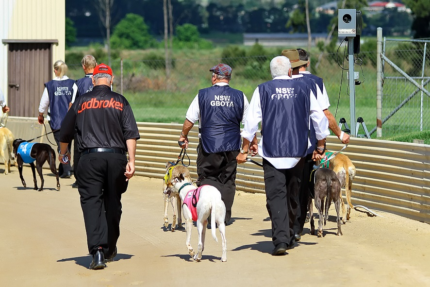 GBOTA :: Greyhound Breeders Owners & Trainers Association -- Trainers