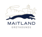 Maidland Greyhounds